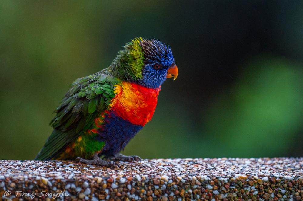 IMAGE: http://smythie.id.au/images/D4/Parramatta/_ATS1911_1000p.jpg