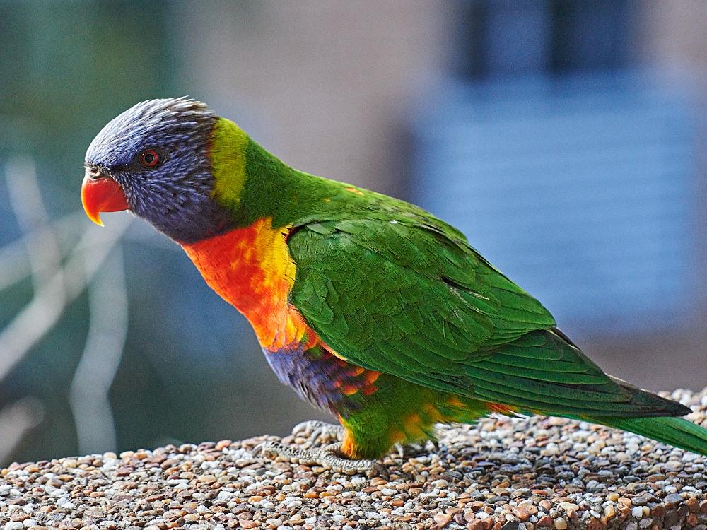 IMAGE: http://smythie.id.au/images/D4/Parramatta/_ATS5771.jpg
