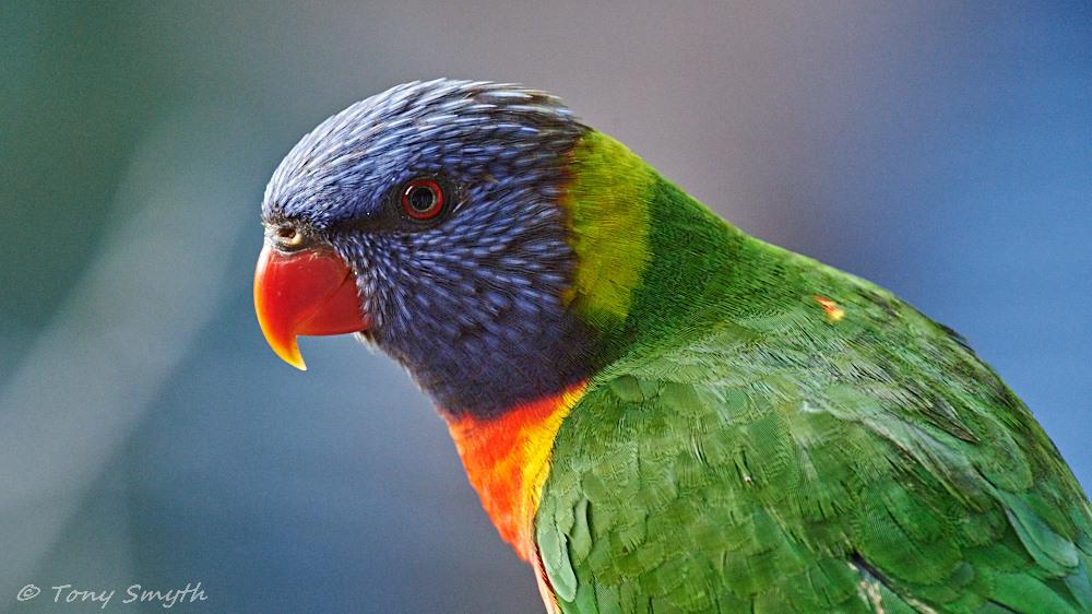 IMAGE: http://smythie.id.au/images/D4/Parramatta/_ATS5776.jpg